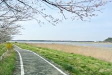 県立自然公園「印旛沼」